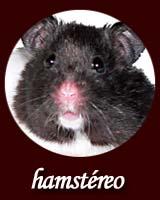 hamstéreo (animal hifi). Par Benide